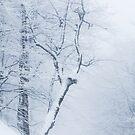 Whiteout by Patrik Lovrin