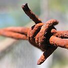 Barbed by Deanna Roberts Think in Pictures