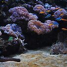 Coral Beauty by Debbie Thatcher