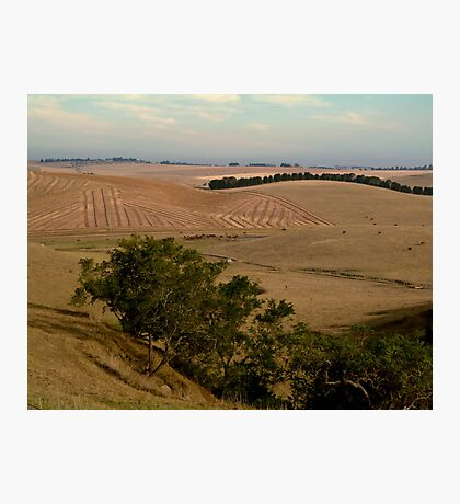 Barrabool Hills Farmlands Photographic Print