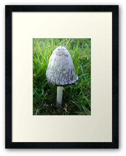 Shaggy Ink Cap by stuart powell