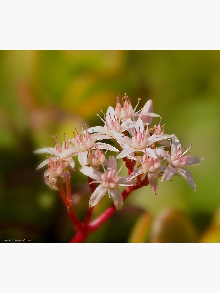 a floral bokeh by rapis60