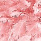 «pluma rosa» de designersara
