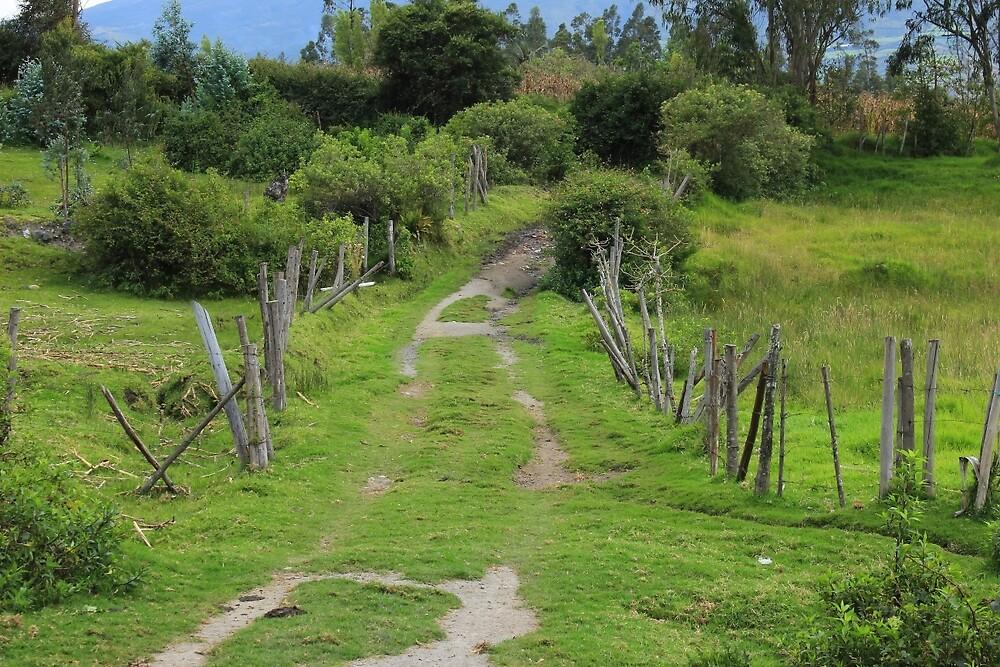 Rural Driveway by rhamm