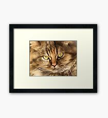 Furry Buddy Framed Print