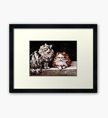 Persian Cats, Silver Tabby and Orange and White Framed Print