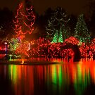 Dancing Lights by Tracy Riddell