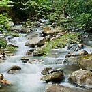 River in Ricon de la Vieja by Tracy Riddell
