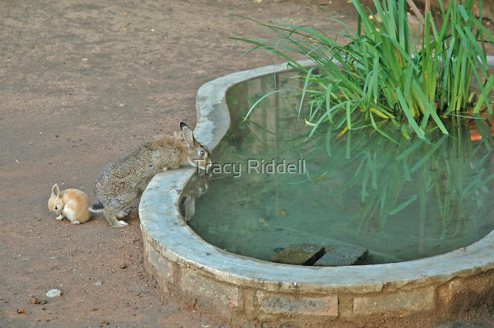 Bunnies of Benoni by Tracy Riddell