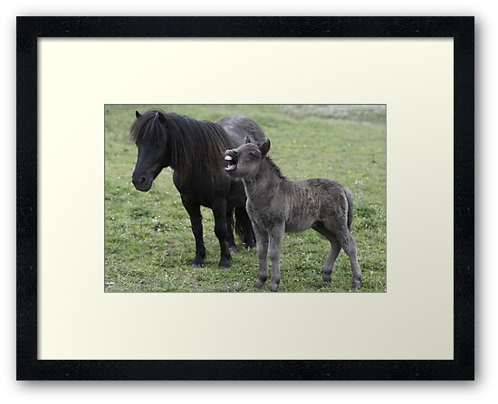 Shetland pony Foal and mare by Frances Taylor