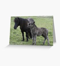 Shetland pony Foal and mare Greeting Card
