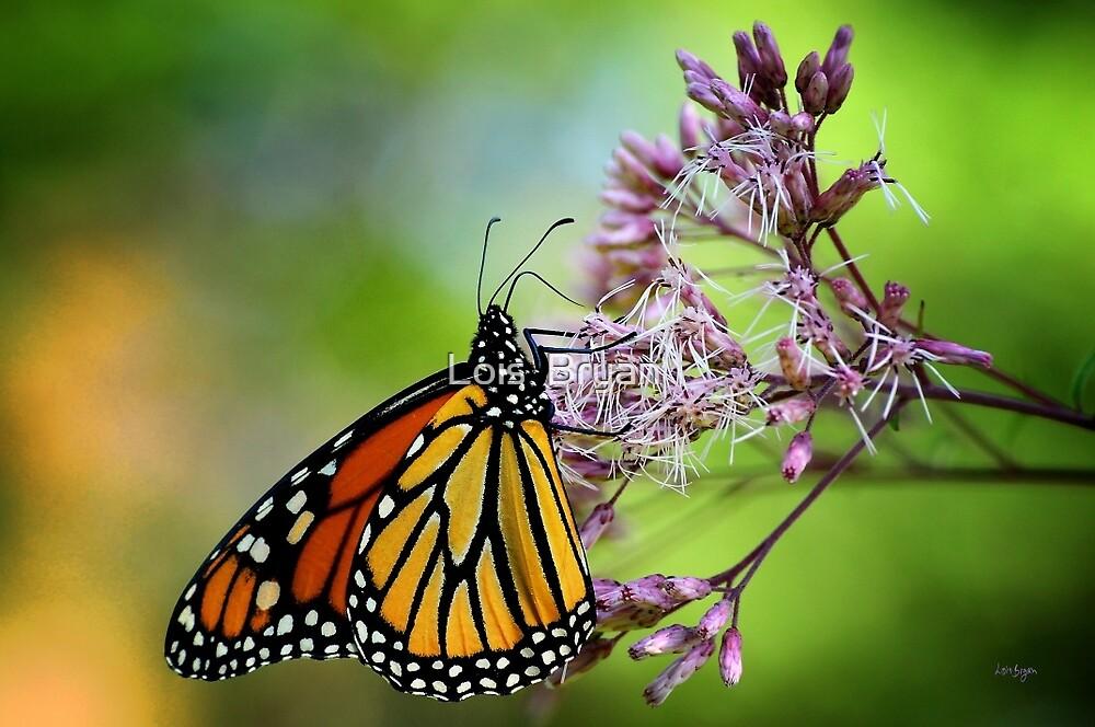 Monarch by Lois  Bryan