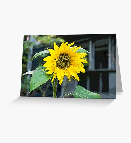 Sunflower, Posterized Greeting Card
