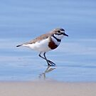 SHOREBIRD ~ Double-banded Plover by David Irwin by tasmanianartist