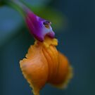 Tiny orange orchid by Lindie Allen