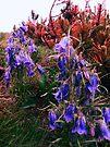 Purple Mountain Flower by schizomania