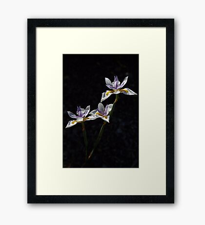 Iris Tro Framed Print