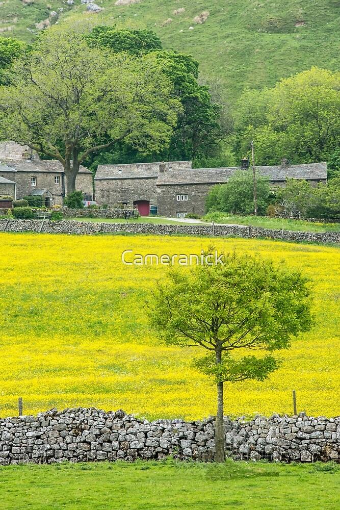 Flower Meadows Halton Gill Yorkshire by Nick Jenkins
