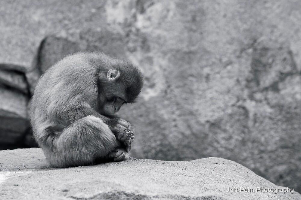 Alone by Jeff Palm Photography