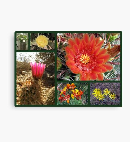 Flowers & Cacti in the Southwest Canvas Print