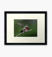 Hummingbird In Vibrant Stretch Framed Print