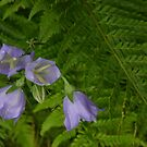 Shapes of leaves and flowers by christopher363