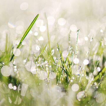 Drizzle'd Grass by johandahlberg