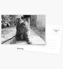 Sketching Toto  Postcards