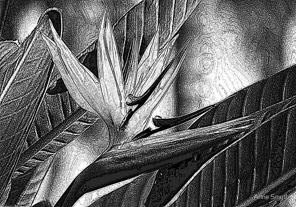 Textured by Anne Smyth