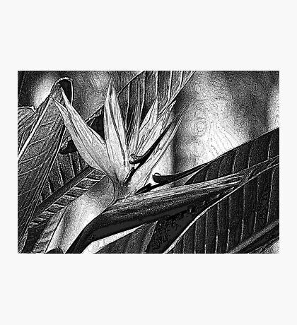 Textured Photographic Print