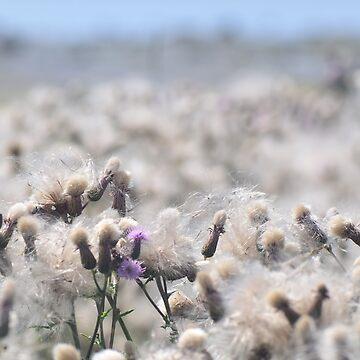 Sea of Seeds by johandahlberg
