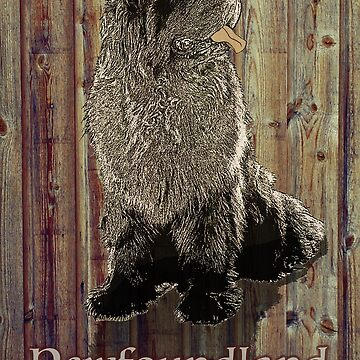 Newfoundland Dog against Wood Background by itsmechris