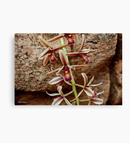 IN CONTRAST - THE ROCK AND THE DELICATE ORCHID Canvas Print