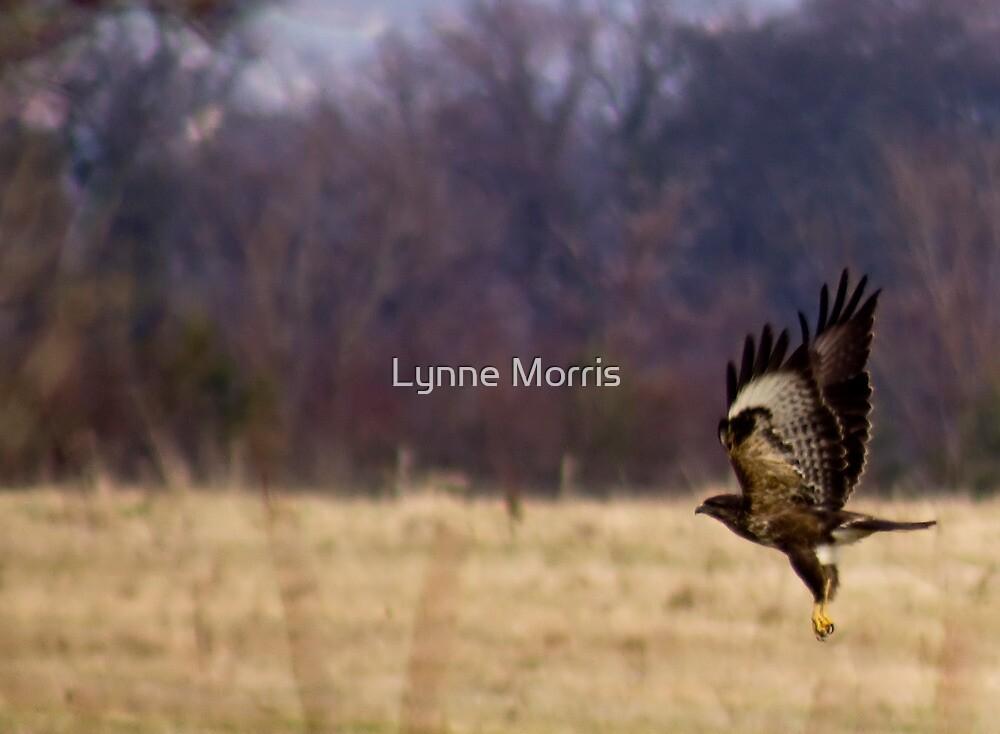 Take Off by Lynne Morris