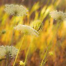 Queen Anne's Lace - A Painting??? by Len Bomba