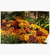 The Richness of Autumn - an Exuberant Display of Chrysanthemums  Poster
