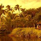 Florida Gold by florene welebny