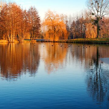 Pond by bonardelle