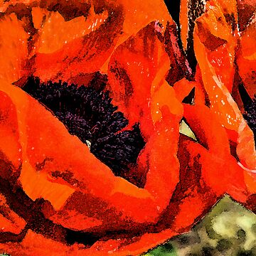 poppies by bonardelle