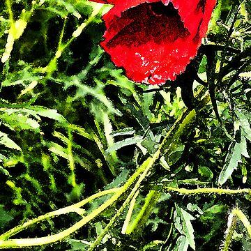 poppy by bonardelle