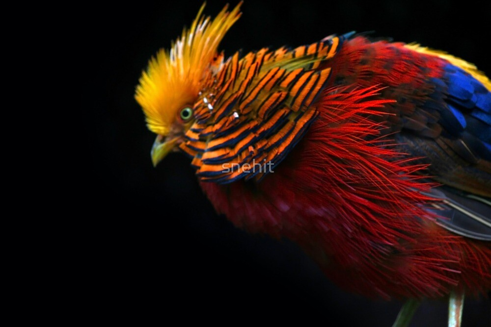 Multi Colored Bird  by snehit