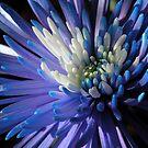Blue Beauty by maf01