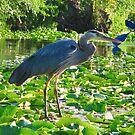 blue heron canoe by Shannon Kringen