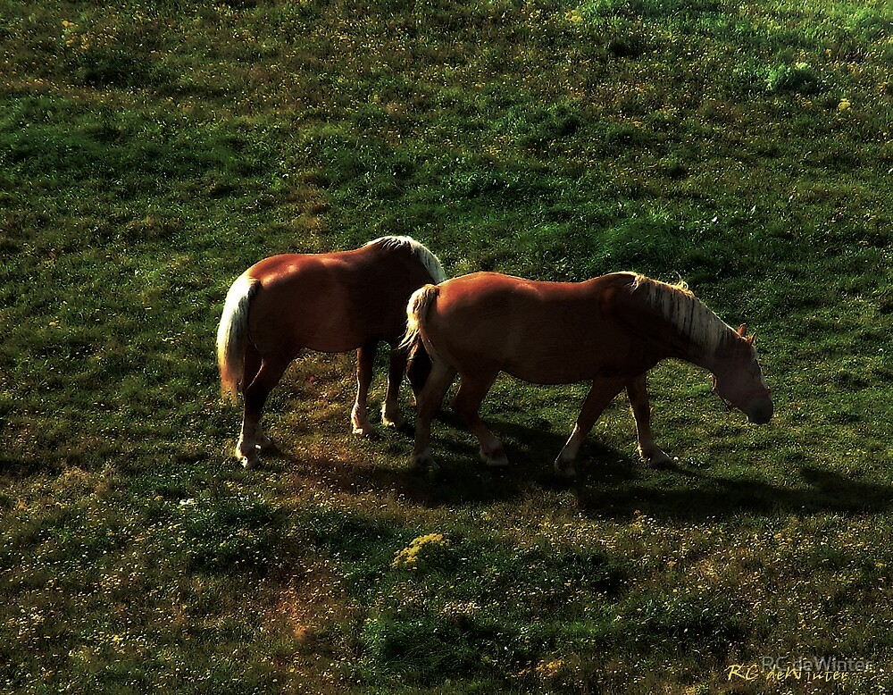 Sunset Snack by RC deWinter
