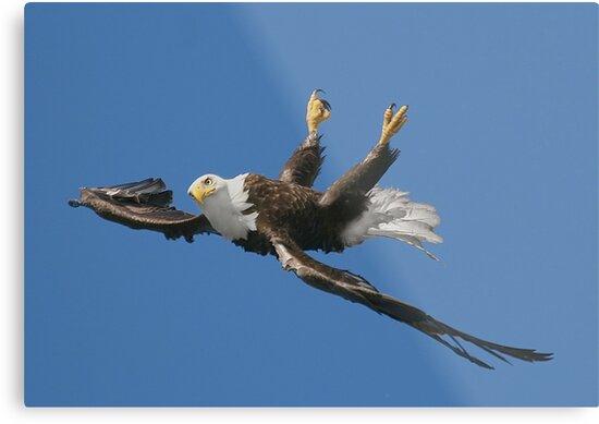 Mid Flight Flip by EagleHunter