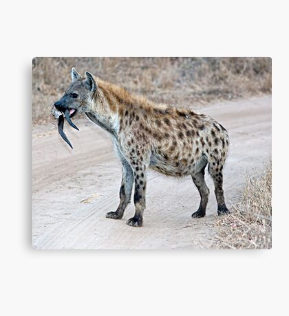 Hyena With Serious Overbite Canvas Print