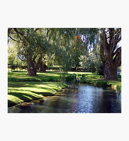 The Willows of Grand Pre Photographic Print