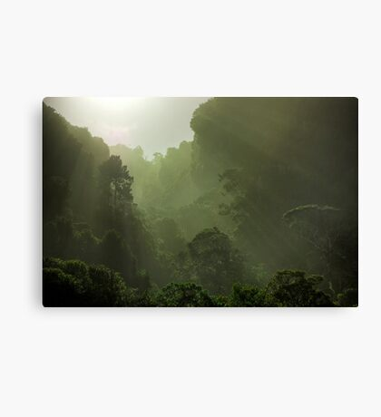 Rain Forest in Early Morning Fog Canvas Print