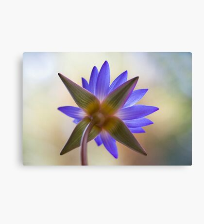 Shining Thru Two - purple waterlilly  Canvas Print