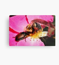 Sharing - Bumblebee and Beetle Sharing Nectar Metal Print